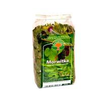 Morwitka